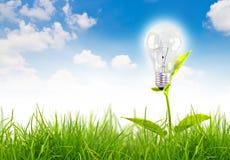 Concetto di Eco - la lampadina si sviluppa nell'erba. Fotografia Stock Libera da Diritti