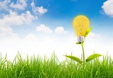 Concetto di Eco - la lampadina si sviluppa nell'erba Fotografia Stock