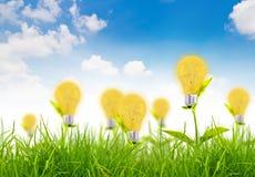 Concetto di Eco - la lampadina si sviluppa nell'erba Fotografia Stock Libera da Diritti