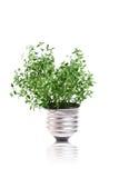 Concetto di Eco: la pianta verde sta sviluppandosi dalla lampadina Immagini Stock