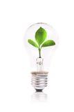 Concetto di Eco: lampadina con la pianta verde all'interno immagini stock libere da diritti