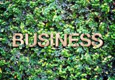Concetto di Eco: Struttura di legno Fotografie Stock Libere da Diritti