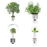Concetto di Eco: varietà di lampadine con l'Istituto centrale di statistica della pianta Fotografie Stock