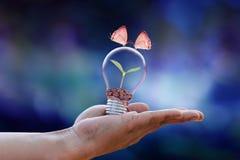 Concetto di ecologia del fiore delle coppie della farfalla immagini stock