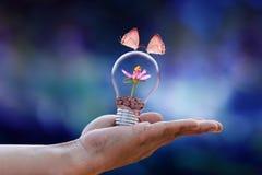Concetto di ecologia del fiore delle coppie della farfalla fotografia stock