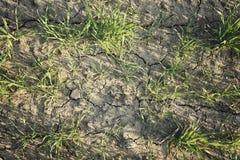 Concetto di ecologia Germogli aumentanti su terra asciutta fotografia stock