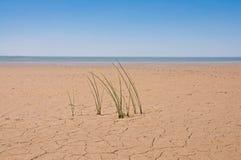 Concetto di ecologia L'erba nella terra asciutta Fotografia Stock Libera da Diritti
