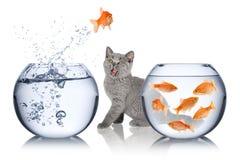 Concetto di fuga del pesce Fotografie Stock Libere da Diritti