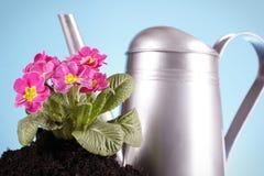 Concetto di giardinaggio! Fotografie Stock Libere da Diritti