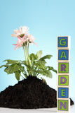 Concetto di giardinaggio! Fotografia Stock Libera da Diritti