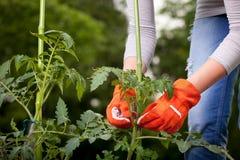 Concetto di giardinaggio Immagini Stock