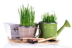 Concetto di giardinaggio Fotografia Stock