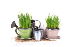 Concetto di giardinaggio Immagine Stock