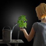 Concetto di giardinaggio - donna che tiene una pianta Fotografia Stock