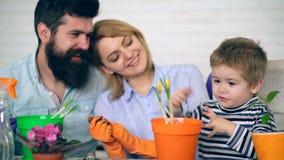 Concetto di giardinaggio I genitori felici sorridono nei precedenti, perché il ragazzo li aiuta per piantare i fiori stock footage