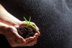 Concetto di Giornata mondiale dell'ambiente: Equipaggia la mano che tiene un piccolo albero Due mani che tengono un albero verde  fotografia stock libera da diritti