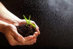 Concetto di Giornata mondiale dell'ambiente: Equipaggia la mano che tiene un piccolo albero Due mani che tengono un albero verde  fotografie stock libere da diritti