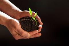 Concetto di Giornata mondiale dell'ambiente: Equipaggia la mano che tiene un piccolo albero Due mani che tengono un albero verde  immagini stock
