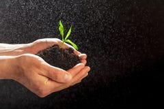 Concetto di Giornata mondiale dell'ambiente: Equipaggia la mano che tiene un piccolo albero Due mani che tengono un albero verde  fotografia stock
