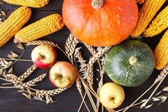 Concetto di giorno di ringraziamento - confine o struttura con le zucche arancio e le foglie colourful su fondo di legno fotografia stock
