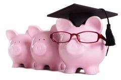 Concetto di graduazione del laureato dello studente di college del porcellino salvadanaio, successo di istruzione, d'istruzione Fotografia Stock