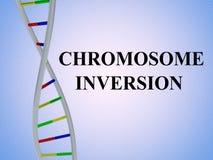 Concetto di INVERSIONE del CROMOSOMA illustrazione di stock