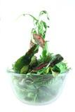 Concetto di leggerezza dell'insalata della bietola da coste e di Rucola Fotografia Stock Libera da Diritti