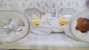 Concetto di maternità del nome Chiuda su di un infante della bambola nell'apparecchiatura o nel couveuse di incubazione, imitando archivi video