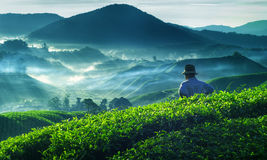 Concetto di occupazione della cultura di Tea Plantation Malaysia dell'agricoltore Fotografia Stock