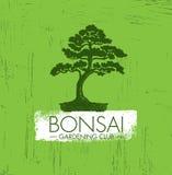 Concetto di progetto creativo di giardinaggio di vettore del club dei bonsai Fondo approssimativo di Zen Tree Icon Illustration O Fotografia Stock