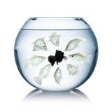 Concetto di razzismo del pesce immagini stock libere da diritti
