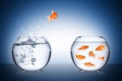 Concetto di ritorno del pesce fotografie stock