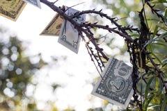 Concetto di successo finanziario I soldi si sviluppano sugli alberi fotografia stock