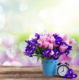Concetto di tempo di primavera Fotografie Stock Libere da Diritti