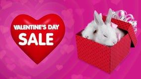 Concetto di vendita di giorno di biglietti di S. Valentino, scatola attuale di caduta con le coppie dei conigli illustrazione di stock