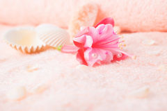 Concetto di viaggio con la fucsia rosa delicata del fiore, conchiglie Fotografie Stock