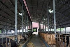 Concetto di zootecnia e di azienda agricola Fotografia Stock Libera da Diritti