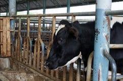 Concetto di zootecnia e di azienda agricola Fotografie Stock Libere da Diritti