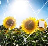 Concetto a energia solare Fotografia Stock