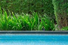 Concetto fresco tranquillo dell'erba nel parco con il sole e il aqu luminosi Fotografie Stock