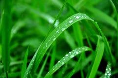 Concetto frondoso e bagnato verde della natura Immagine Stock