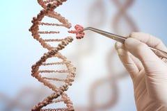 Concetto genetico di manipolazione del gene e di ingegneria La mano sta sostituendo la parte di una molecola del DNA fotografia stock libera da diritti