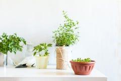 Concetto leggero di giardinaggio della primavera Fotografia Stock