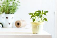 Concetto leggero di giardinaggio della primavera Fotografia Stock Libera da Diritti