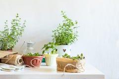 Concetto leggero di giardinaggio della primavera Fotografie Stock Libere da Diritti