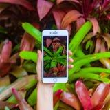 Concetto mobile di fotografia Smartphone della tenuta della mano della donna e foto di presa dei fiori e degli alberi su fondo La fotografie stock libere da diritti