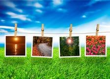 Concetto naturale della foto Immagine Stock