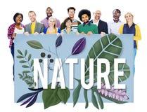 Concetto naturale di crescita della terra verde dell'ambiente della natura Fotografia Stock