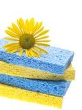 Concetto naturale di pulizie di primavera Immagine Stock Libera da Diritti