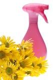 Concetto naturale di pulizie di primavera Immagini Stock